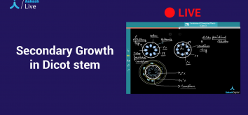 Secondary Growth in Dicot System
